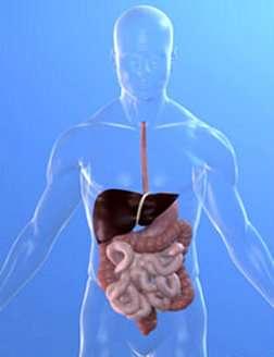 Plus besoin de biopsie pour diagnostiquer les cirrhoses du foie, un simple test sanguin suffit. © Sebastian Kaulitzki, Fotolia