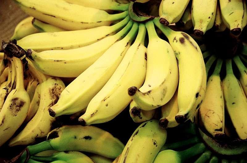 Environ 15 % des bananes produites en Équateur sont jetées sur place pour des raisons esthétiques ou économiques. Les autres sont transportées par bateau vers l'Europe (12 jours de voyage) où elles vont être placées dans une mûrisserie durant 8 à 10 jours. Elles seront mises en vente 22 jours après leur récolte… et jetées au bout de 96 heures seulement si personne ne les achète. © Fernando Stanjuns, Flickr, cc by nc sa 2.0