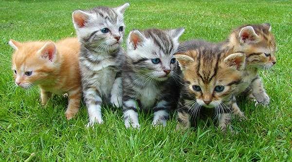Les chatons joueurs. © Yann Mallander, Pixabay, DP