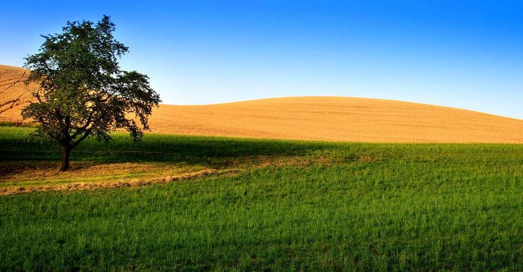 C'est en été, par température élevée et fort ensoleillement que peuvent se produire des épisodes de forte pollution par l'ozone. © Pdimaria, CC0 Domaine public