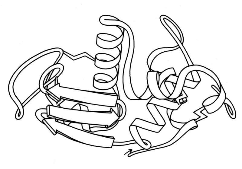 Structure du lysozyme, la protéine présente dans le blanc d'œuf. © Dcrjsr, d'après un dessin de Jane Richardson, Wikimedia Commons, CC by 3.0