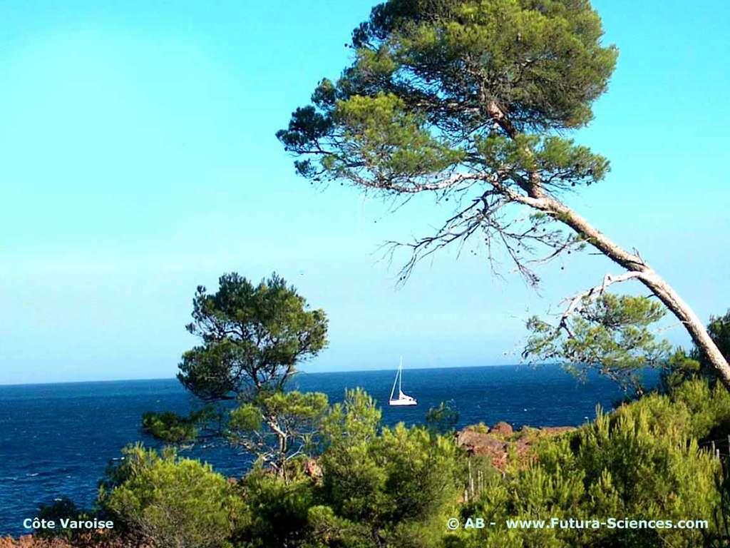 En Méditerrannée