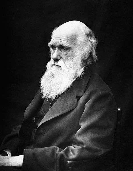 On doit la théorie de l'évolution par la sélection naturelle à Charles Darwin, qui développa sa théorie en 1859 dans son ouvrage L'origine des espèces par les moyens de la sélection naturelle. © J. Cameron, Wikipédia, DP