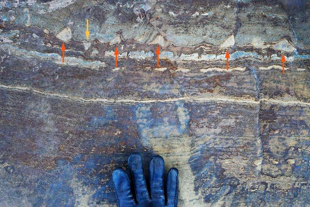 Les structures en forme de cônes attribuées à des films microbiens constructeurs de stromatolites sont bien visibles sur cette strate où elles sont indiquées par des flèches. Mais on remarque que si certaines sont bien pointées vers le haut, comme attendu, l'une l'est vers le bas. © Abigail Allwood