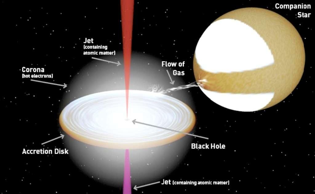 Le flot de gaz d'une étoile alimentant le disque d'accrétion d'un trou noir (black hole) s'échauffe et rayonne dans le domaine des rayons X. L'ensemble est entouré, comme le montre ce schéma, de l'équivalent du plasma de la couronne solaire avec des électrons chauds. On pense maintenant que les jets de matière s'élevant parallèlement à l'axe de rotation du trou noir contiennent des atomes ionisés en plus d'électrons. © J. Miller-Jones (Icrar), avec un programme crée par R. Hynes