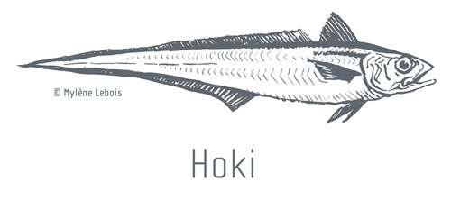 La pêcherie du hoki en Nouvelle-Zélande, labellisée MSC, est-elle réellement durable ? © Mylène Lebois