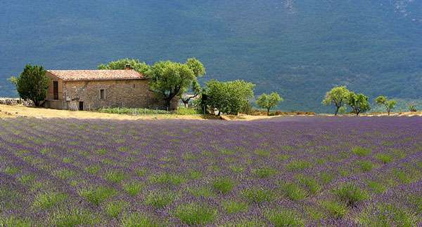 Paysage provençal. © Jialiang Gao GNU Free Documentation License version 1.2