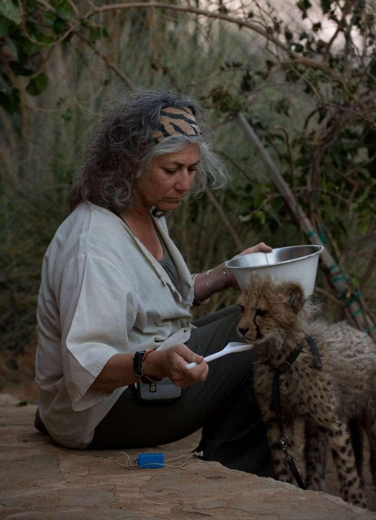 Laurie Marker en plein nourrissage d'un jeune guépard. © Laurie Marker DR, Cheetah conservation fund
