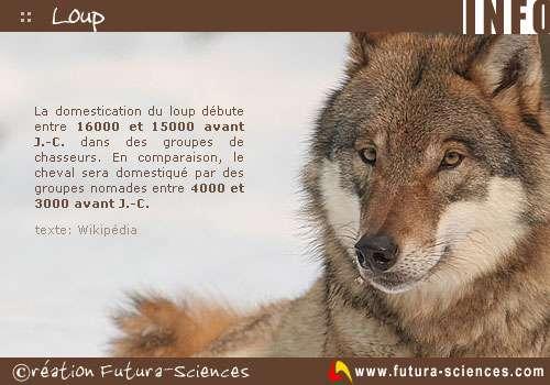 Histoire du loup