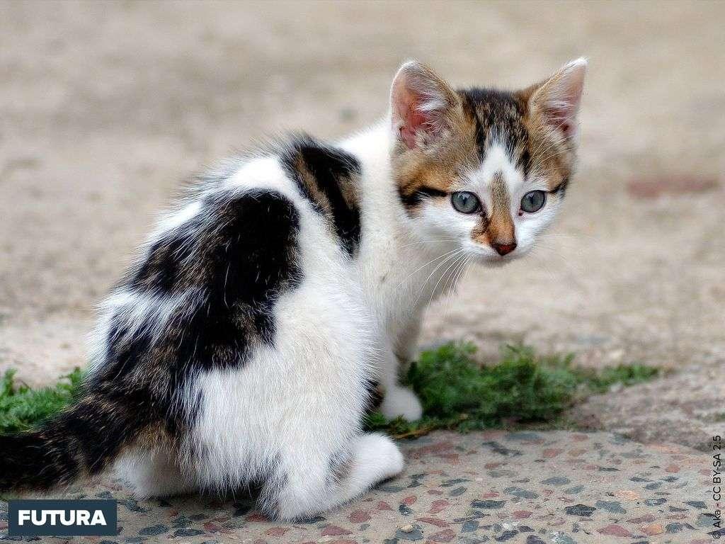 Adorable chaton âgé de six semaines