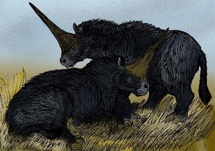 Une représentation d'Elasmotherium sibericum montrant qu'il s'agissait plutôt d'un rhinocéros poilu. © Stanton F. Fink, Wikimedia Commons, CC by-sa 3.0