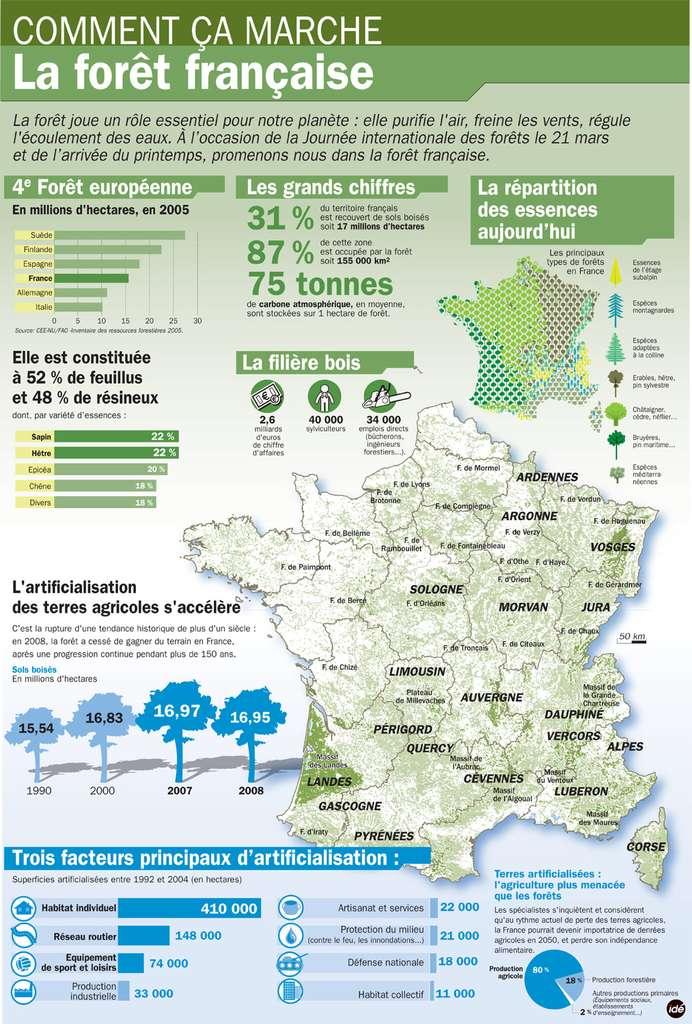 Ce qu'il faut retenir des forêts en France. © IDE