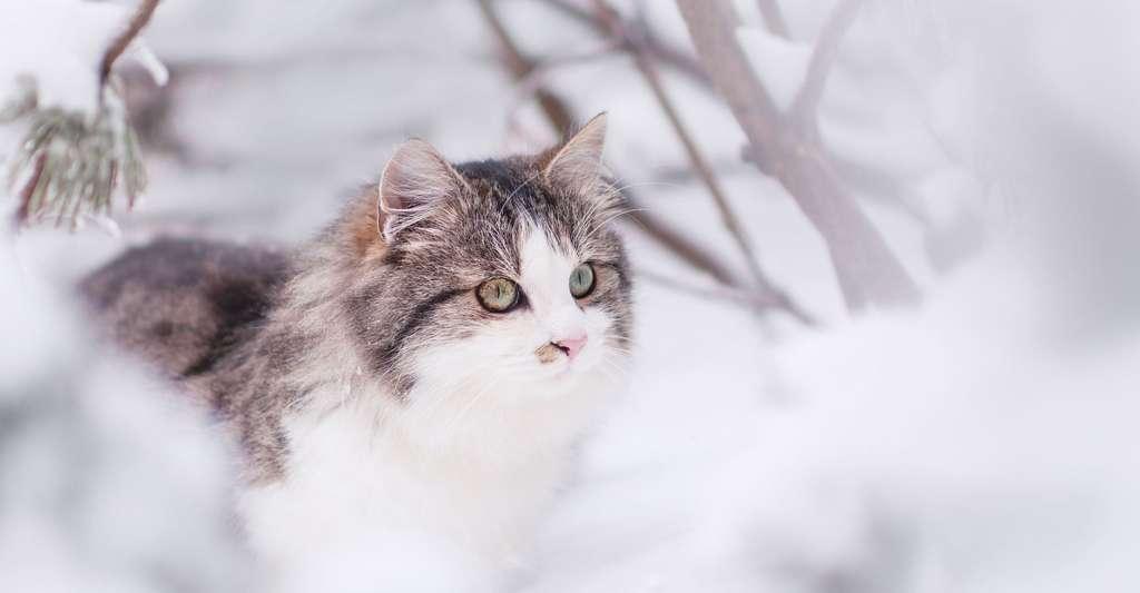Le chat et le climat. © Lepale, Pixabay, DP