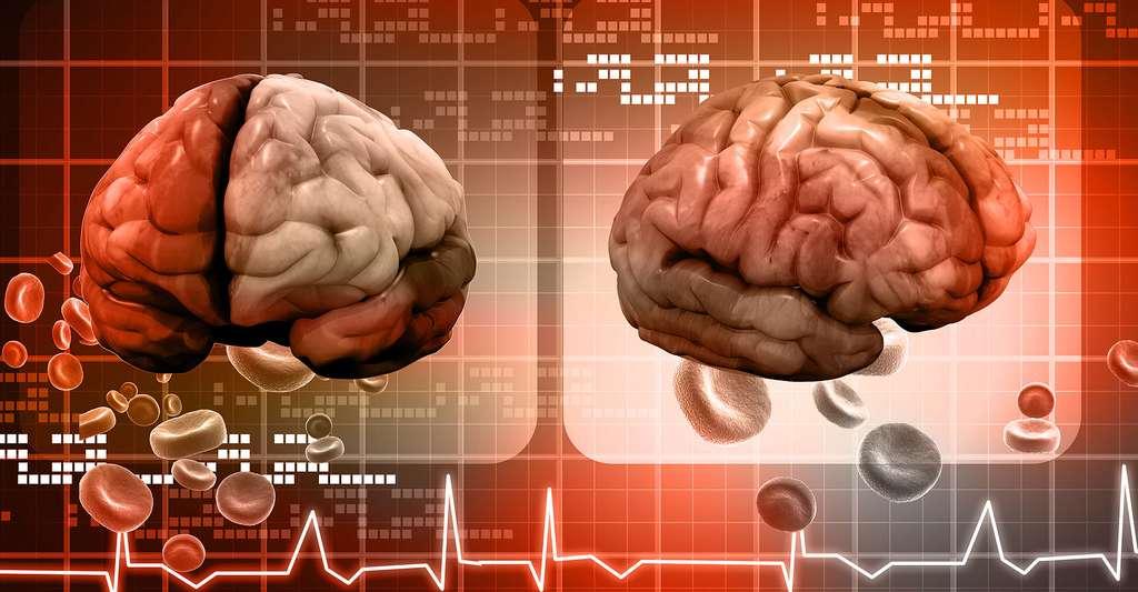 Le cerveau humain est très gourmand en substances nutritives. © Ramcreations, Shutterstock
