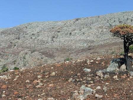 Un affleurement de cherts du Buck Reef en Afrique du Sud. Crédit : Mike Tice