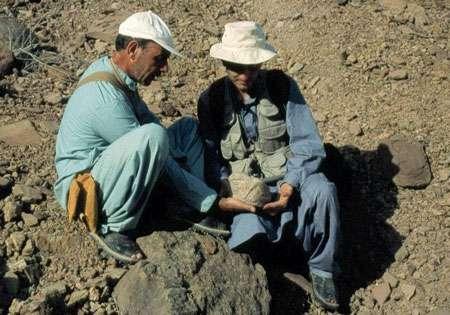 Le premier reste identifiable de baluchithère, découvert en 1999. C'est un os du poignet, grand comme une cerise chez l'homme. Jean-Loup Welcomme et Laurent Marivaux servent d'échelle. © 1999 MPFB (POA)