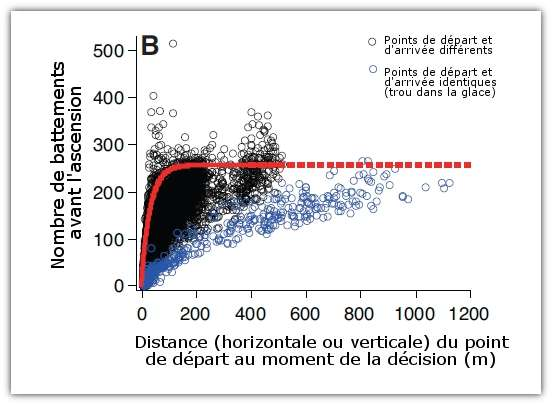 En moyenne, le nombre de battements maximum avant la remontée vers la surface du manchot empereur est de 255. © Shiomi et al. 2011, Journal of Experimental Biology - adaptation Futura-Sciences