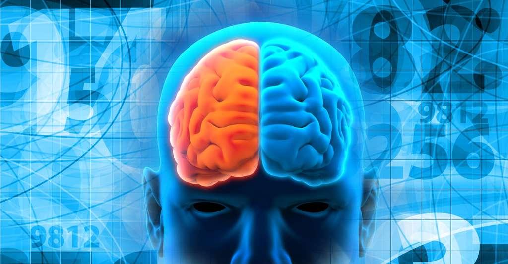 Petite mathématique du cerveau. © Nerthuz/pixeldreams.eu, Shutterstock