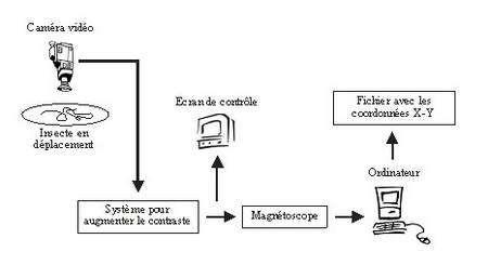Figure 1 : Description schématique du dispositif informatique permettant l'enregistrement automatique du déplacement d'insectes parasitoïdes.