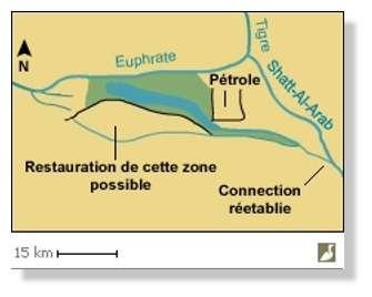 Simulation de la restauration des marais Hammar (Irak). En vert, superficie possible des marais recrées. En noir : digues. Les surfaces qui seront réellement remises en eau dépendront des contraintes de salinité et de toxicité des sols, de la disponibilité en eau et des priorités des responsables. Les digues pourront être déplacées pour optimiser les flux. Source : ITAP / Iraq Foundation. Simulation de la restauration des marais centraux