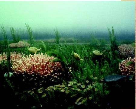 L'océan tel qu'il pouvait être pendant le Cambrien. Crédit : Advameg Inc.