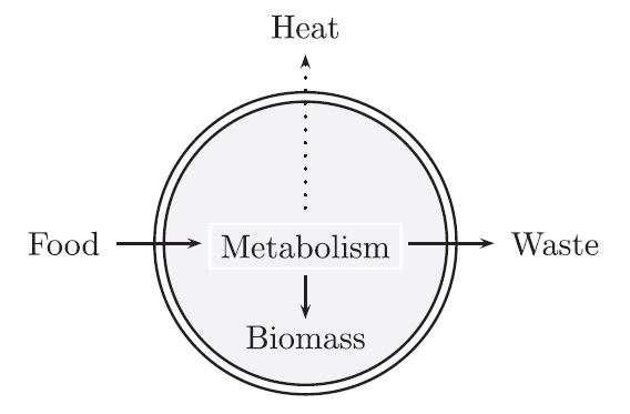 Simplification extrême du fonctionnement d'une protocellule. Avec de la nourriture, la protocellule (délimitée par une double membrane) produit de la biomasse, des déchets et de la chaleur. © Attal et Schwartz, 2021
