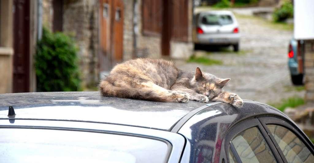 Ne laissez surtout jamais un chat ou un chien seul dans une voiture par temps chaud. © ravabo, Pixabay License