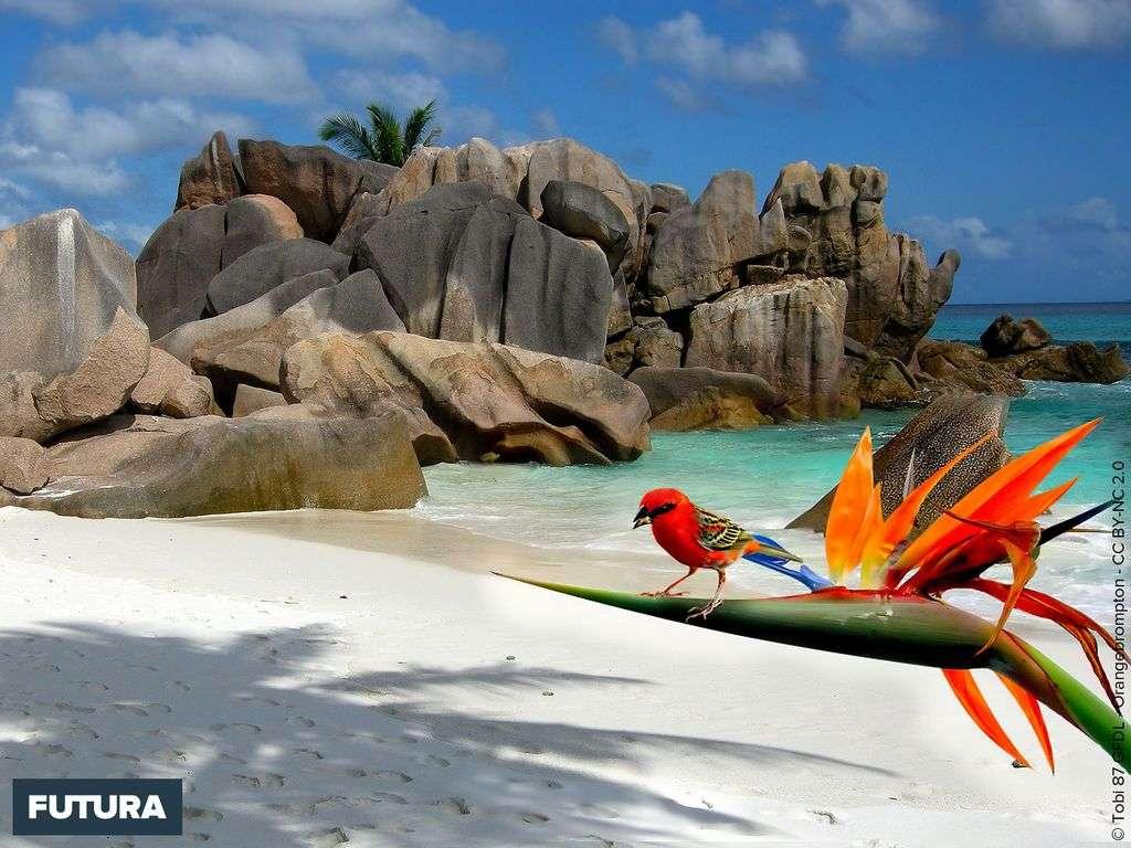 Seychelles : Ile de la Digue