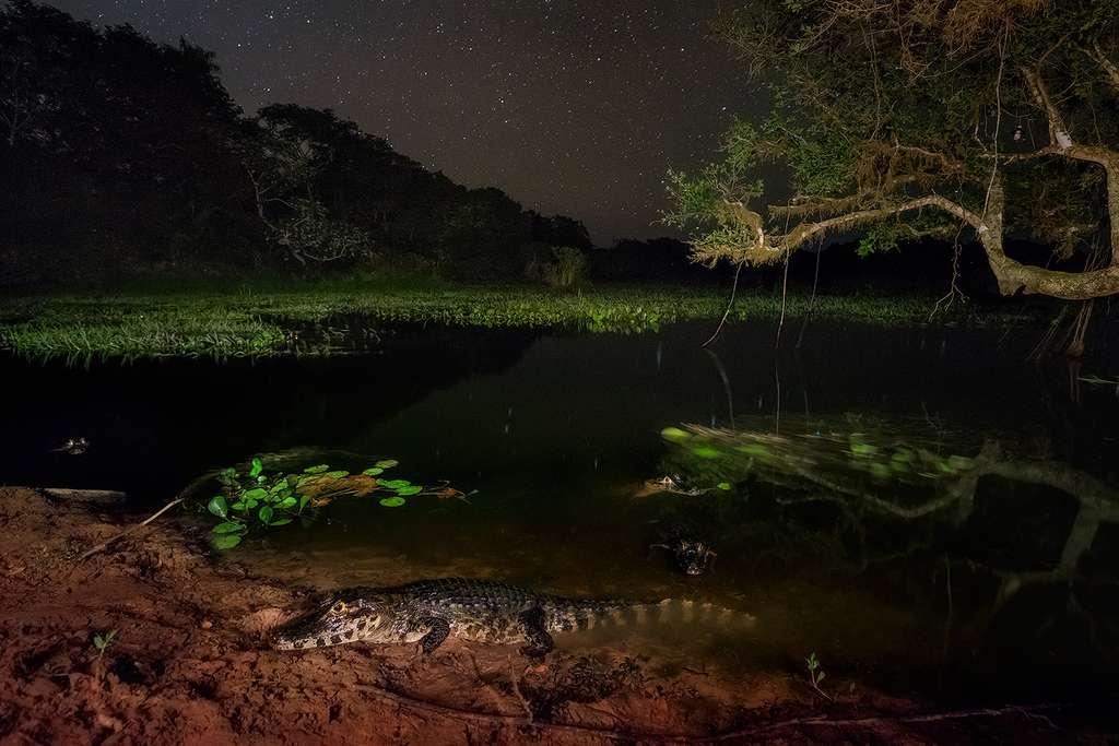 Montrer les beautés de la nature pour sensibiliser les gens à la préservation de l'environnement, c'est la volonté de Marcio Cabral, photographe brésilien. Ici, le Pantanal dans toute sa splendeur. © Marcio Cabral, Tous droits réservés, Reproduction interdite