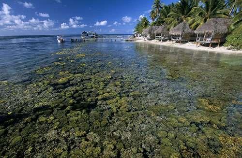 Atoll de Fakarava, dans l'archipel des Tuamotu - Réserve de la biosphère. Sur cette image, le platier corallien apparait parfaitement a travers l'eau transparente du lagon. © Photographe Alexis Rosenfeld Tous droits réservés