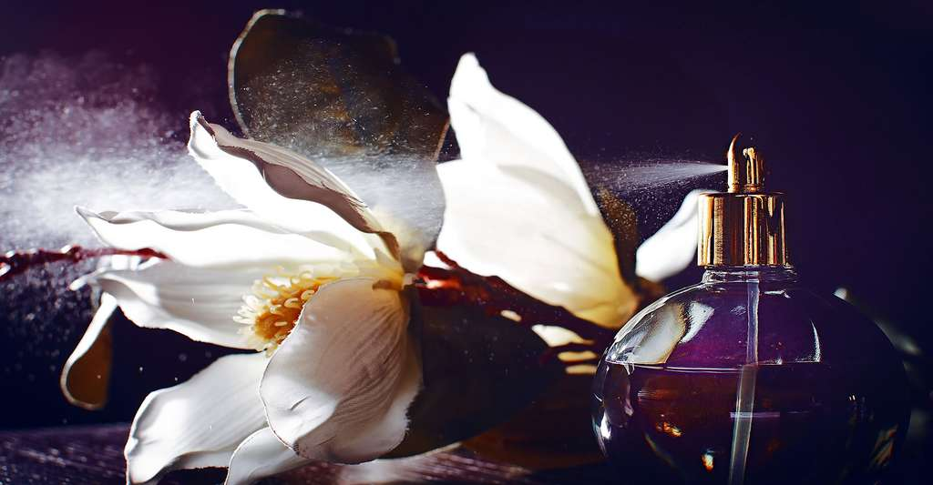 Les parfums sont-ils nocifs pour la santé ? © Matryoha, Shutterstock