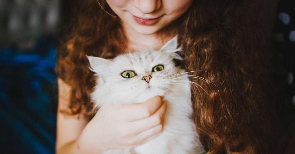 Toxoplasma gondii, responsable de notre amour pour nos chats ? Une hypothèse sans réelles preuves solides. © Veronika Homchis, Adobe Stock