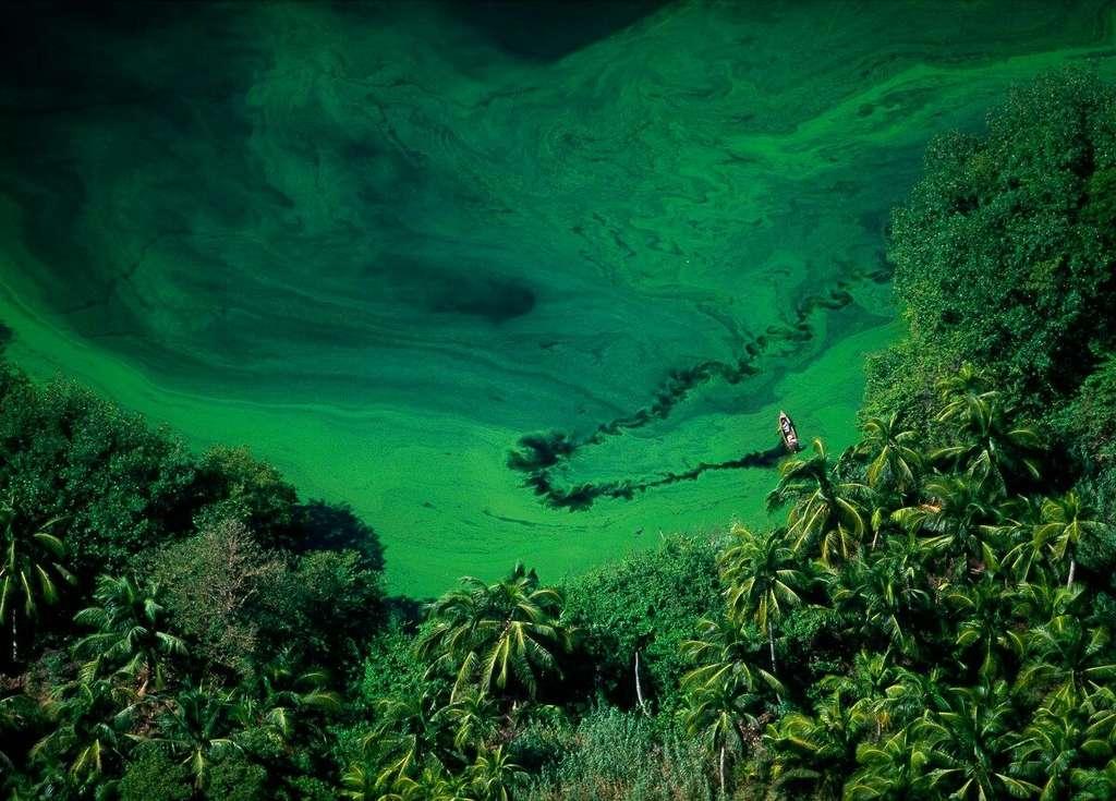 Lagune de Los Micos dans la région de San Pedro Sula, Honduras (15°47' N – 87°35' O). © Yann Arthus-Bertrand