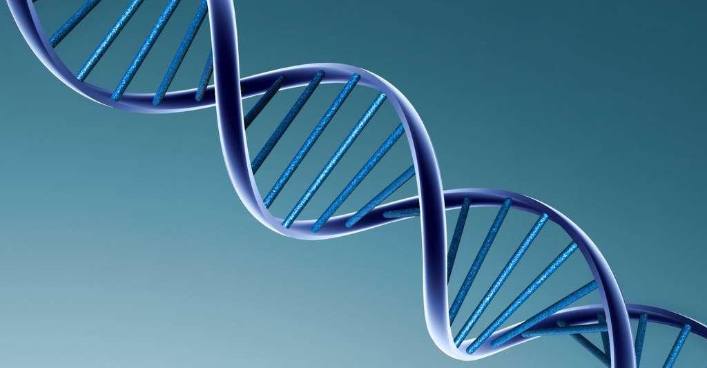 L'ADN est le support de l'information génétique. Les instructions codant les caractéristiques des êtres vivants se trouvent sur cette molécule. © Erick Tumualdo bustos ortega, Wikimedia commons, CC by-sa 3.0