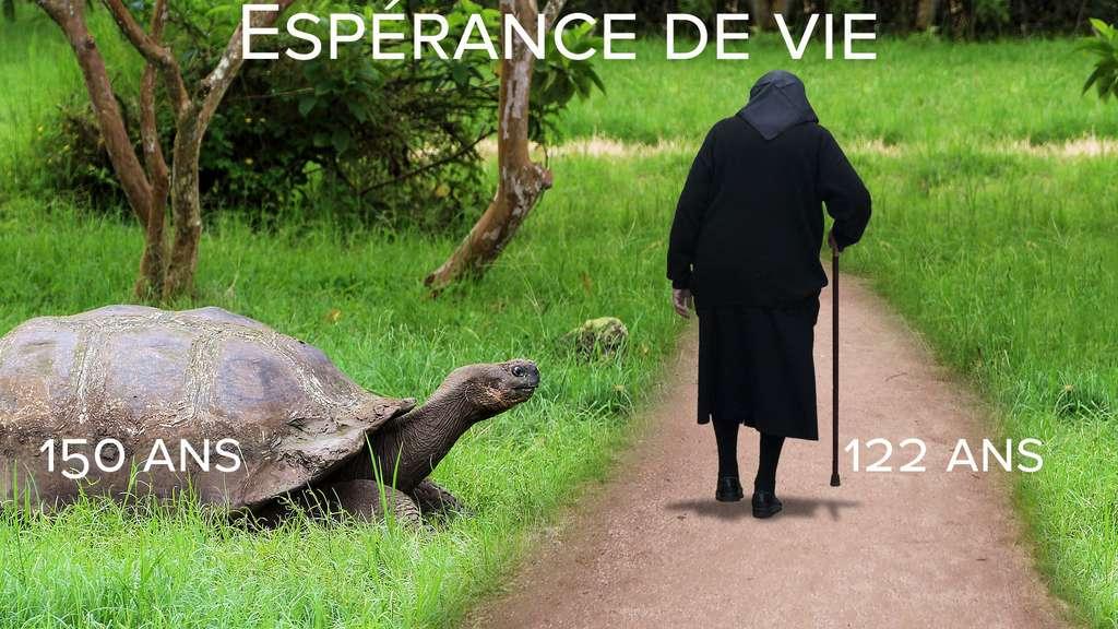 Espérance de vie : la tortue géante des Galápagos, doyenne des animaux