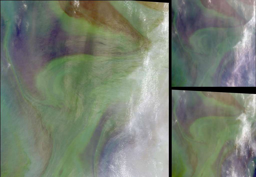 Image satellite du bloom phytoplanctonique (en vert) résultant d'une fertilisation naturelle de la mer d'Oman par les vents de sable riches en fer. © Nasa, GSFC, LaRC, JPL, MISR Team