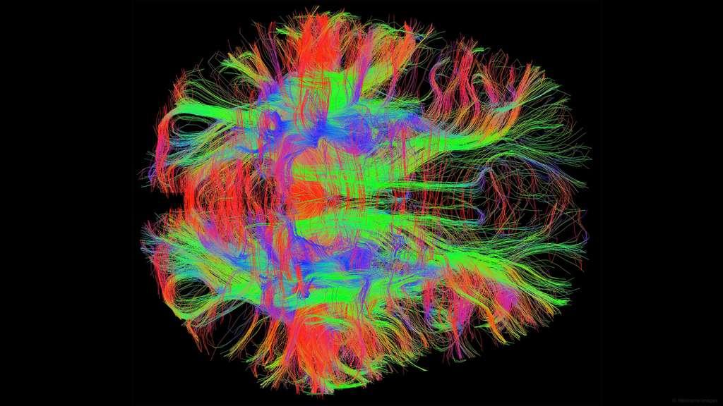 Les circuits neuronaux du cerveau