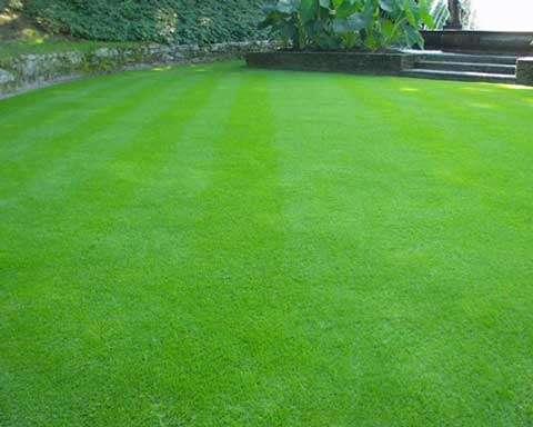 La chaux est aussi utilisée pour les pelouses.