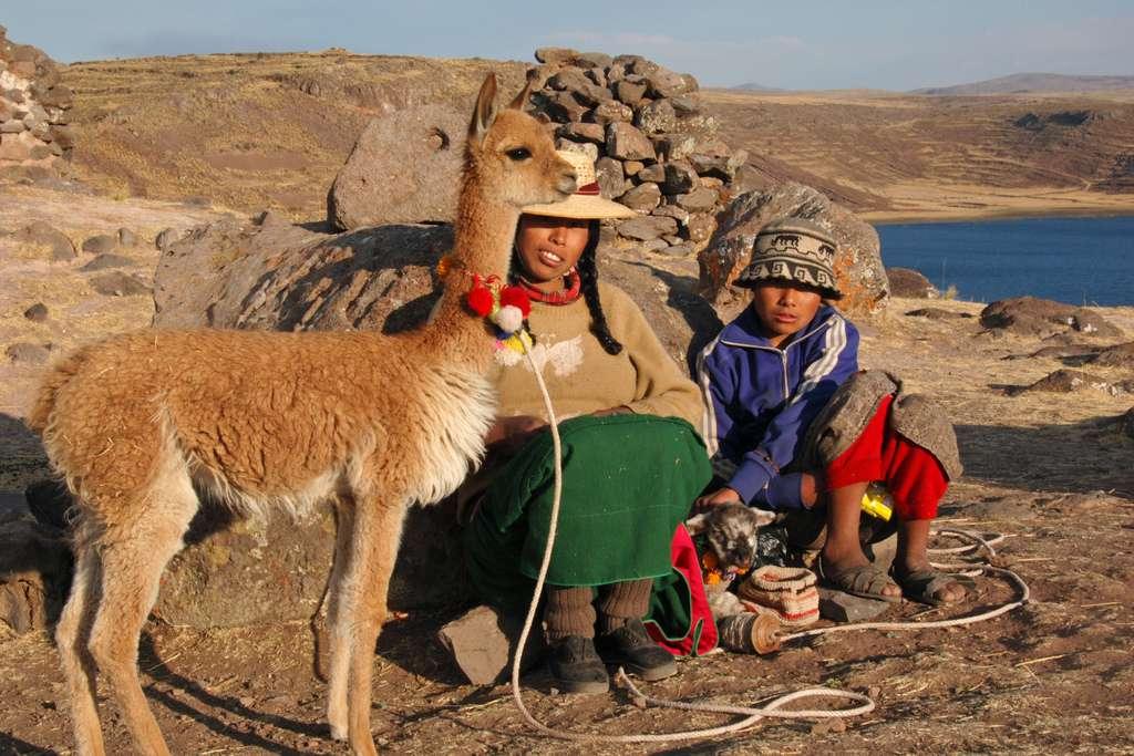 Vigogne captive au Pérou. © Sylvain Bourdos, Flickr, cc by nc sa 2.0
