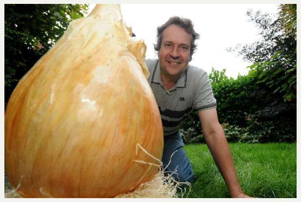 Tony Glover pose à côté de l'oignon qu'il a cultivé durant 11 mois et qui lui a valu de figurer dans le Guinness. © Cascade