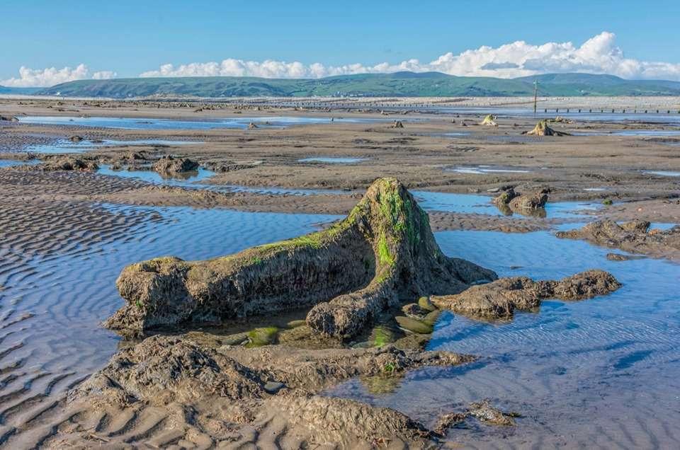 Les arbres fossilisés ont été préservés du temps grâce à la tourbe acide. © Welsh photographs, Facebook