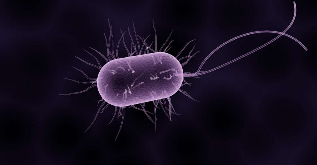 Une bactérie. © Sbtlneet, Pixabay, DP