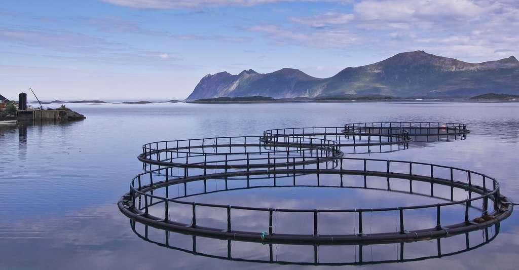 Fermes aquacoles. © MP Cz - Shutterstock