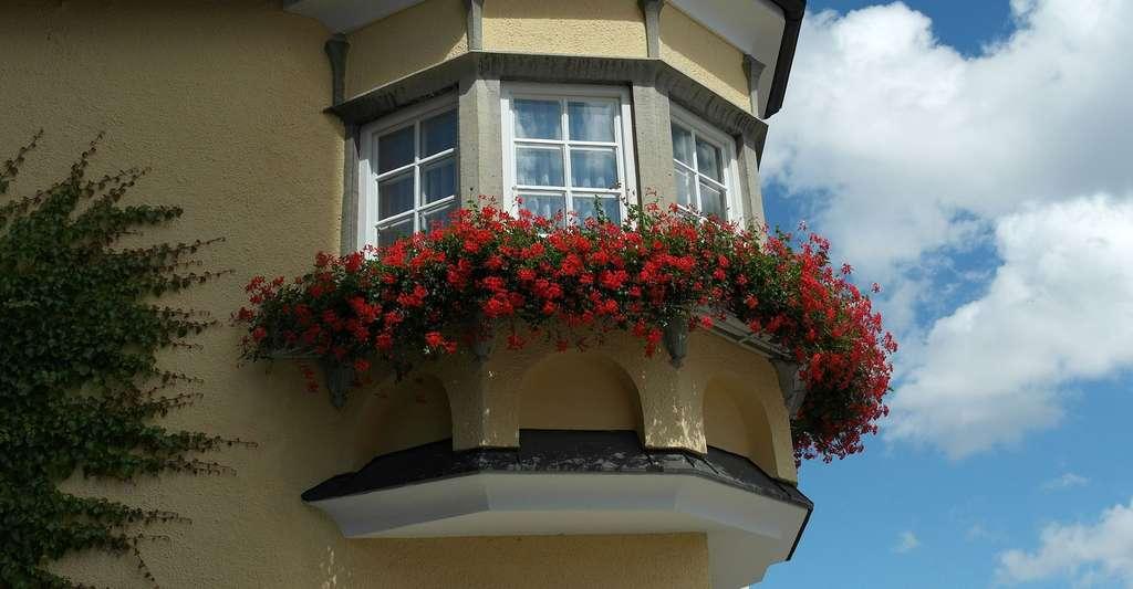 Balconnières de géraniums. © RitaE, Pixabay, DP