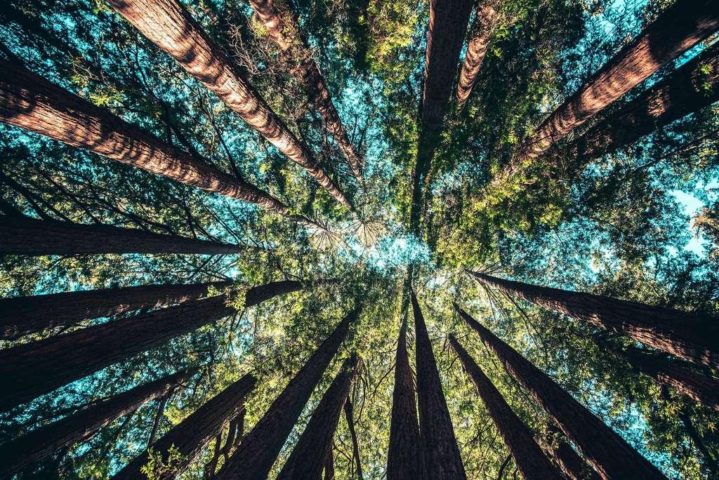 Mauvais élève du climat mondial, l'Australie veut planter 400.000 hectares de forêt d'ici 2050. © Casey Horner, Unsplash