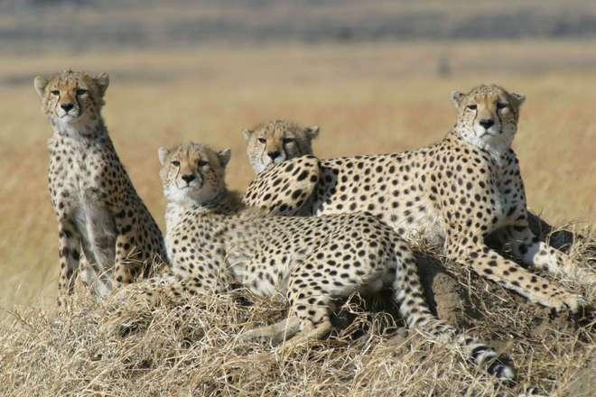 Une femelle et ses petits. © ZSL