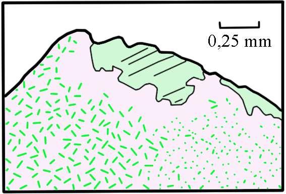 Ci-dessus, représentation d'une section polie d'un grenat (rose) des kimberlites de Jagersfontein. Il est constellé d'aiguilles de pyroxène (vert), exsudées par un grenat majoritique initial, au cours d'une phase de décompression. Les grands cristaux de pyroxène ont été exsudés latéralement par le grenat, comme le suggère l'absence d'aiguilles en leur voisinage. © D'après Steve Haggerty et Violaine Sautter, 1990