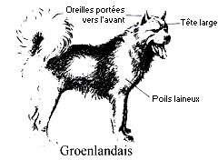 Comment reconnaître un Groenlandais - Copyright photo François Beiger (tous droits de reproduction interdit)