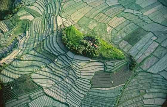 Indonésie : ilôt dans les rizières en terrasses de Bali
