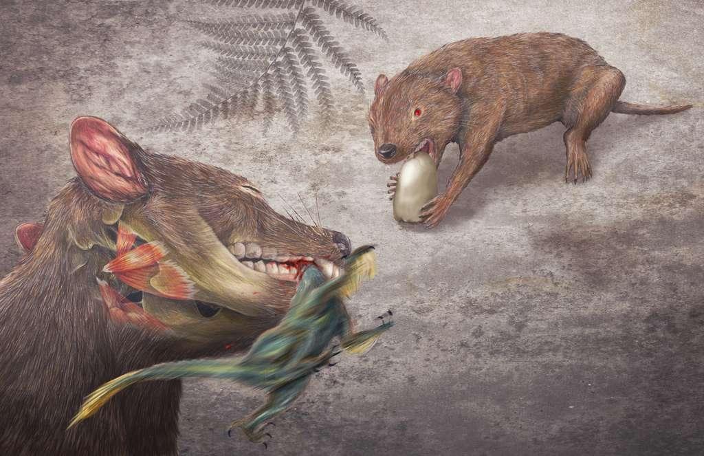 Ici, une représentation du Didelphodon, un marsupial de la taille d'un blaireau et qui vivait au Crétacé supérieur. Il est réputé avoir eu la mâchoire la plus puissante de tous les mammifères connus. © Misaki Ouchida, Université de Washington